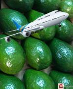 Avocado SEMIL 34 fresh Dominican Republic by plane, Moscow