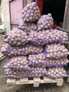 Potatoes for sale in bulk from the manufacturer, Spas-Klepiki