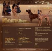 Sell the puppies of the Thai Ridgeback from parents Champions